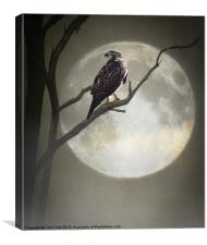 A HAWK IN THE MOONLIGHT, Canvas Print