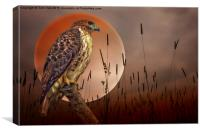 Red Tail Hawk At Rest, Canvas Print