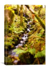 Burbling Stream, Canvas Print