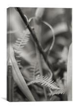 Twists, Canvas Print
