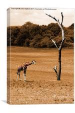 Giraffe 2, Canvas Print