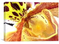 Orchid, Canvas Print