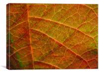 Leafy layers, Canvas Print