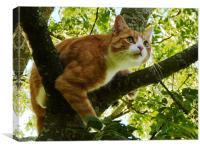 Tree Cat, Canvas Print