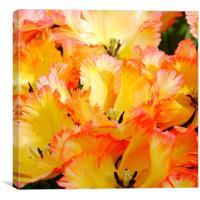 Firey Tulip, Canvas Print