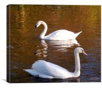 Swan Song, Canvas Print