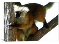Lemur Party, Canvas Print