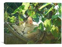 Cat nap, Canvas Print