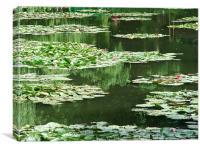 Monet Lilies, Canvas Print