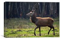 Woodland King