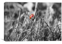 Ladybird coloursplash, Canvas Print