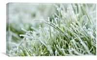 Frost on Grass, Canvas Print