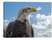 Bald Eagle (3), Canvas Print