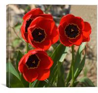 Tulips at Ipsden, Canvas Print