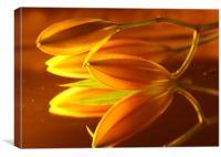 Golden Lillies, Canvas Print