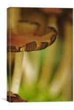 toadstools, Canvas Print