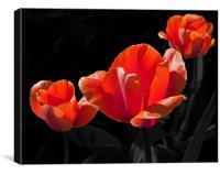 Three Tulips, Canvas Print