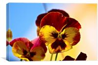 The Pansy, Canvas Print
