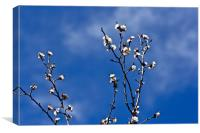 Apricot Blossoms, Canvas Print