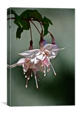 Pink Marshmallow Fuschia