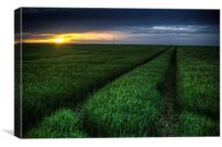 Tracks in the crop, Canvas Print