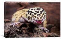 Leopard Gecko, Canvas Print