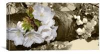 Cherry Blossom in sepia, Canvas Print