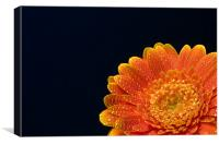 Orange Gerbera, Canvas Print