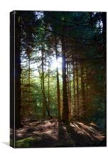 Magic Of The Woods, Canvas Print