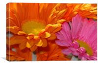 Orange and Pink Flowers, Canvas Print