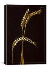 Golden Barley, Canvas Print
