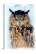 European Long Eared Owl, Canvas Print