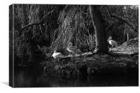 Pelican Island, Canvas Print