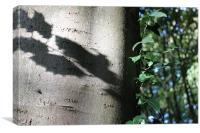 Holly shadow