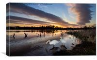 Arcot Swans, Canvas Print