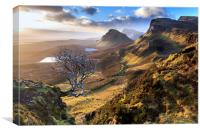 Quiraing Tree, Canvas Print