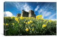 Warkworth Daffodils, Canvas Print