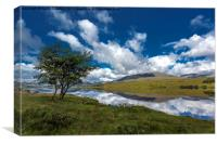 Loch Tulla Tree, Canvas Print