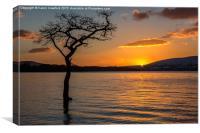 Milarrochy Bay Sunset, Canvas Print