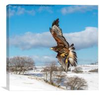 In Flight, Canvas Print