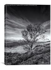 Corby Crags, Canvas Print