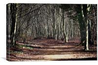 Ancient Wandlebury woodlands near cambridge