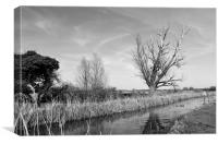 Fenland Lode, Canvas Print