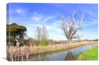 Fenland Scene - A view of a fen lode, Canvas Print