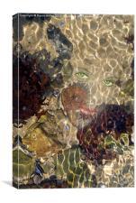 She Shells, Canvas Print