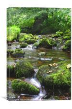 Mossy brook, Canvas Print