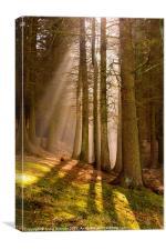Deanclough forest, Canvas Print
