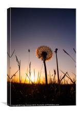 Dandilion sunset, Canvas Print