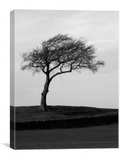 The lonesome leaning tree, Canvas Print