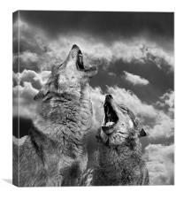 Howling (Canis lupus), Canvas Print